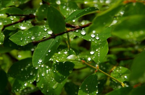 Goutte d'eau - goutte de pluie - Lago Misurina Dolomites - Dolomite - Forêt Dolomites