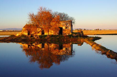 reflet - miroir - arbre - parc naturel du delta de l'ebre - catalunya - amposta - pentax K5II