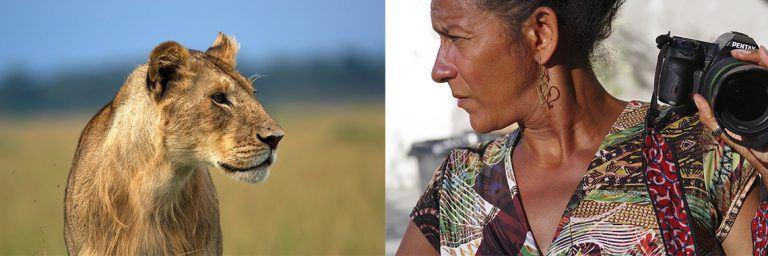 IN OF AFRICA _ LODEVE _ EXPOSTION _ RESTAURANT _ LE MINUSCULE _ Pentax K5II -lionne - crinière - lion masai mara - kenya - masaï mara - rift valley - melting pot safari - protection des animaux - workshop Laurent Baheux