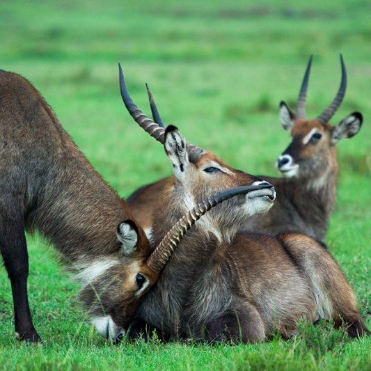wildlife - vie sauvage -Pentax K5II - masai mara - kenya - masaï mara - rift valley - melting pot safari - protection des animaux - workshop Laurent Baheux - l