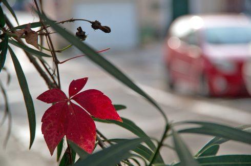 Popian - ambiance -ruralité - couleur automnale - rouge - hérault tourisme - occitanie