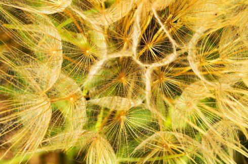 Printemps - Vendémian - Confinement - fleur