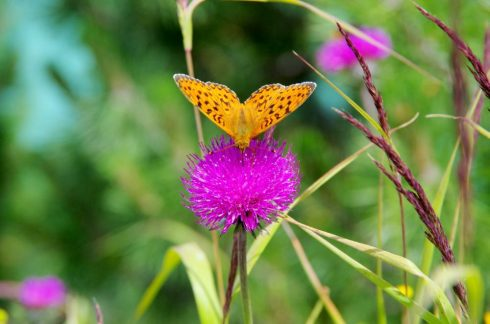 Papillon-dolomites